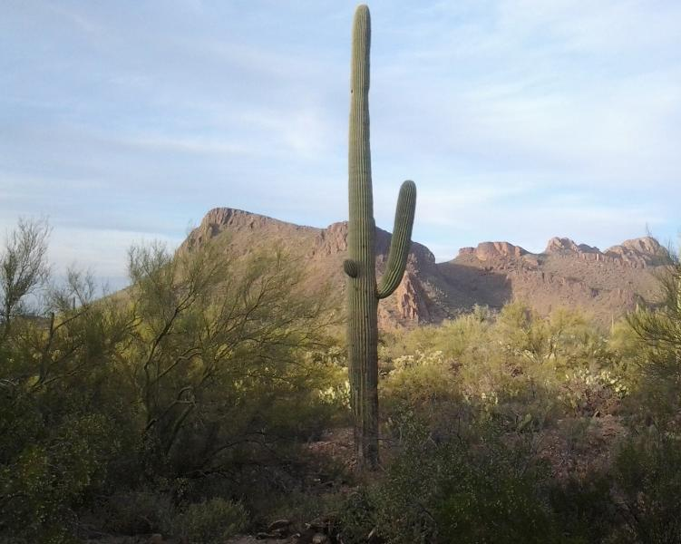 Panther Peak, Saguaro National Park West