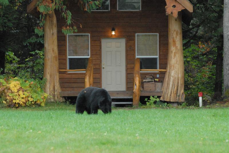 Bear bete utanför hytten.