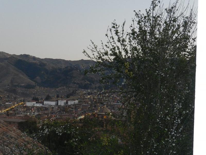 views and tree cherries