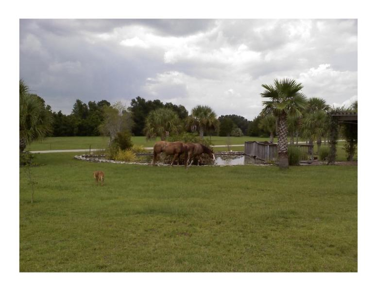 Horses grazing next to the pond