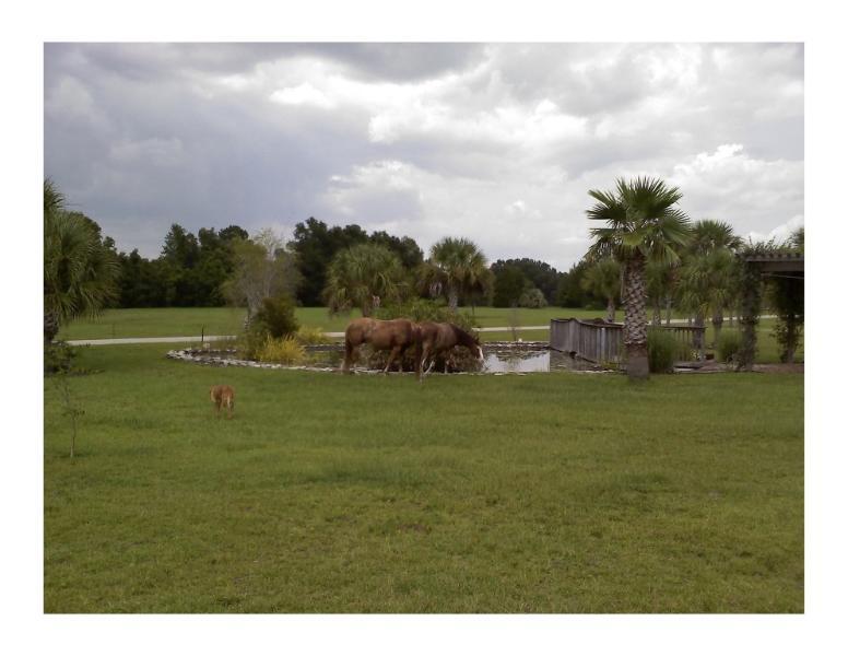 Cavalos pastando ao lado da lagoa
