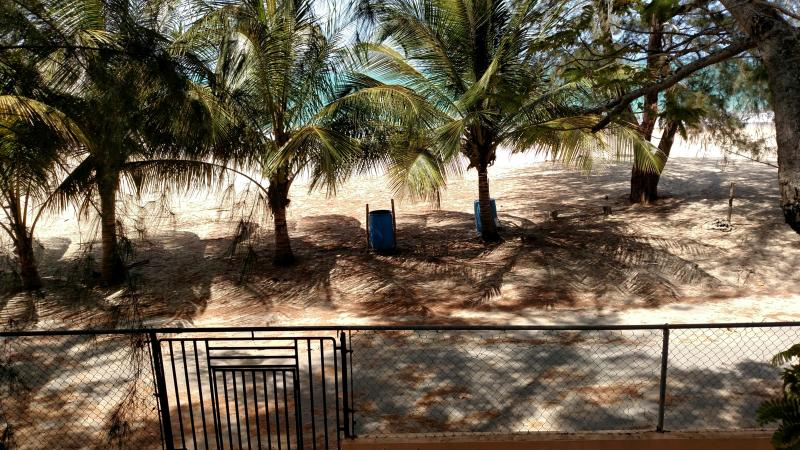 Enjoy the Trees on the Beach -- Just Outside of Our Front Gate