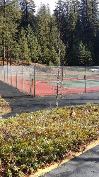Blue Lake Springs Tennis Court