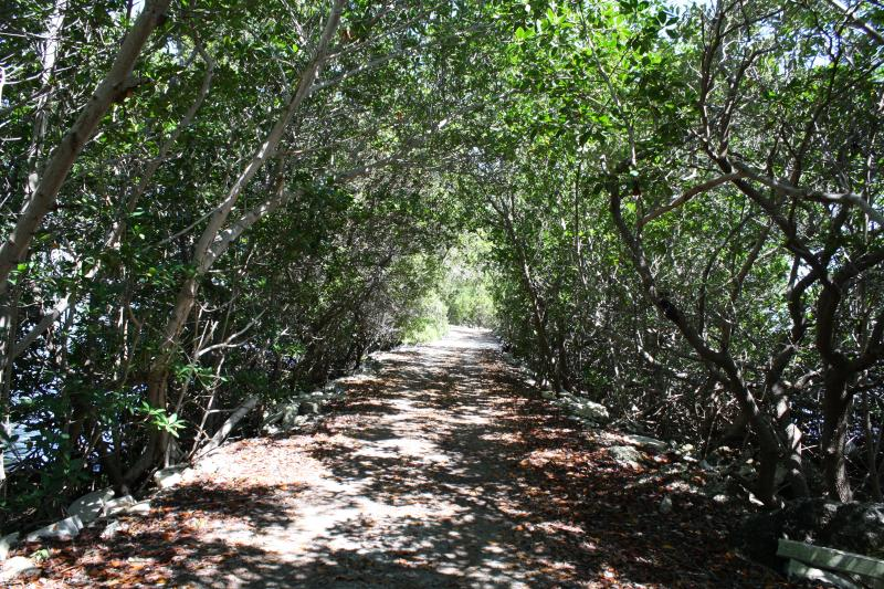 Walk way to the Jetty through the Mangrove forest,