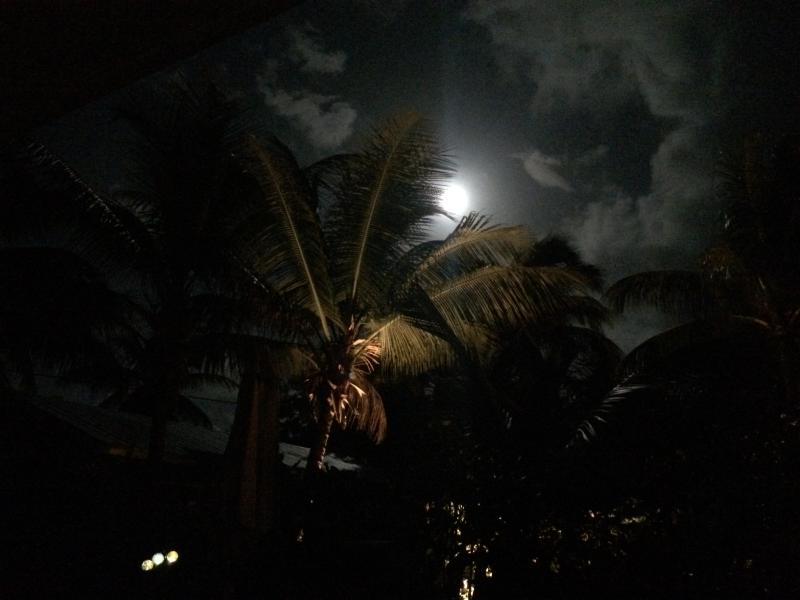 Tropical garden with Coconut palms at night, front porch of 8b