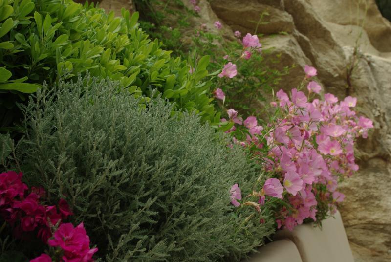 El jardín cuenta con arbustos de hierbas aromáticas y locales