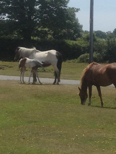 Ponies outside cottage gate