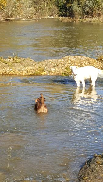 al Paseos rio Mas Torrencito pet amigável Girona