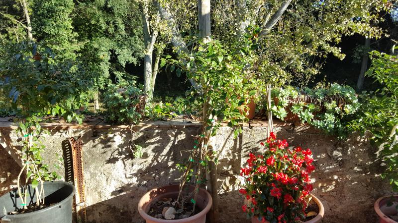 Terraza Mas Torrencito pet friendly Girona