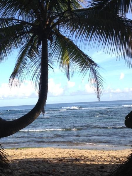 La palma solitaria ~ la sombrilla de playa al final de nuestro camino de la playa
