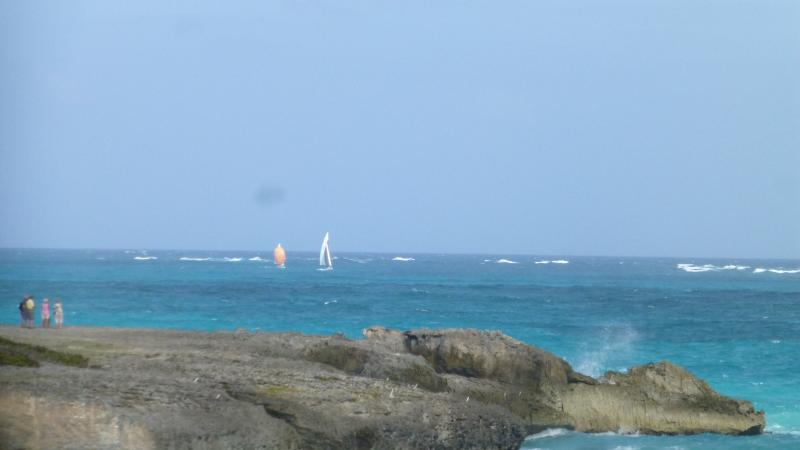 ¡Razas alrededor de Barbados!
