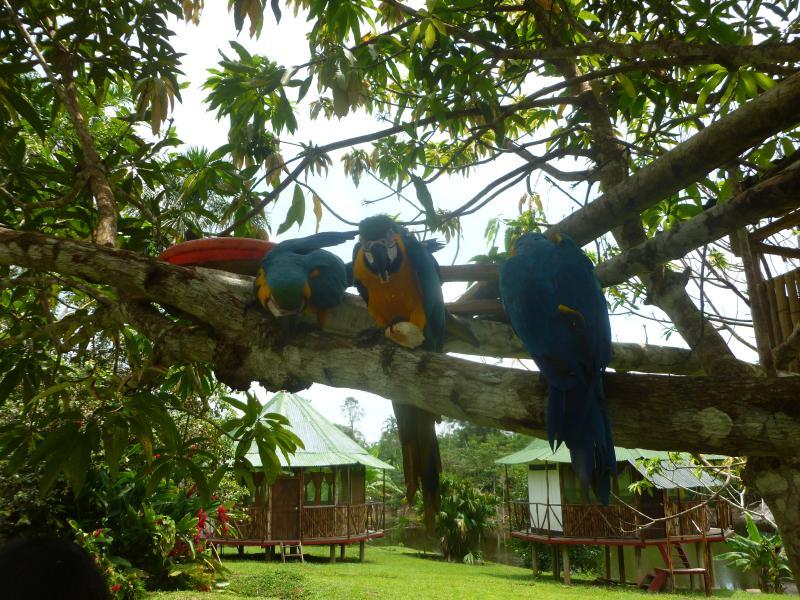 hotel, location de vacances à Iquitos