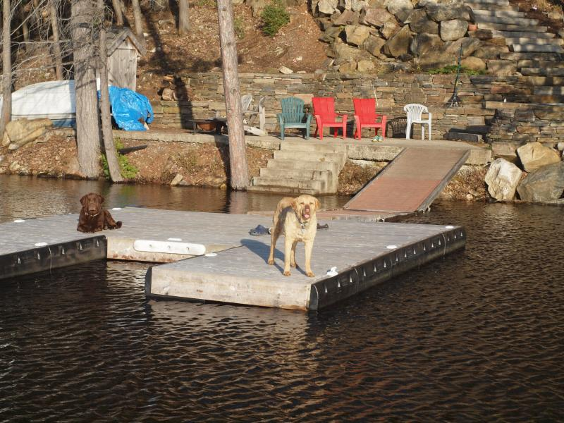 Spring view of the dock (with dogs).