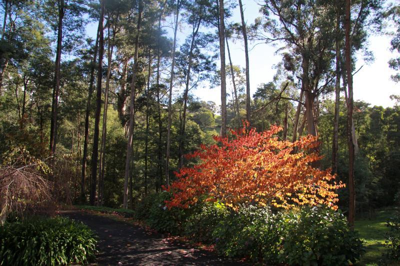 Fernglade Homestead autumn garden