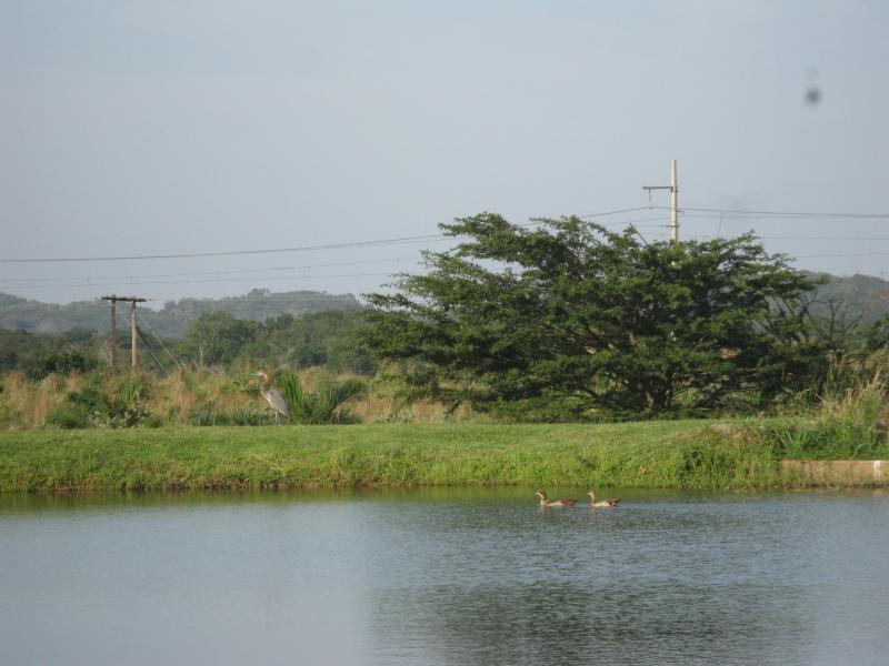 Small dam on the estate. Has a bird hide