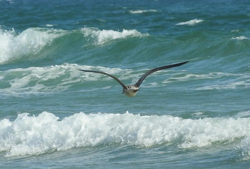 Uno de nuestros amigos animales, navegar por el mar en busca de un pescado fresco puede ser ....