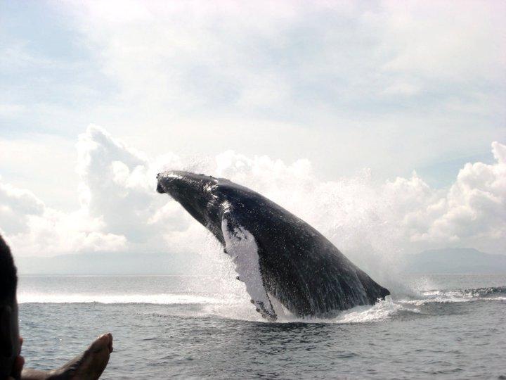 Santuario delle Balene