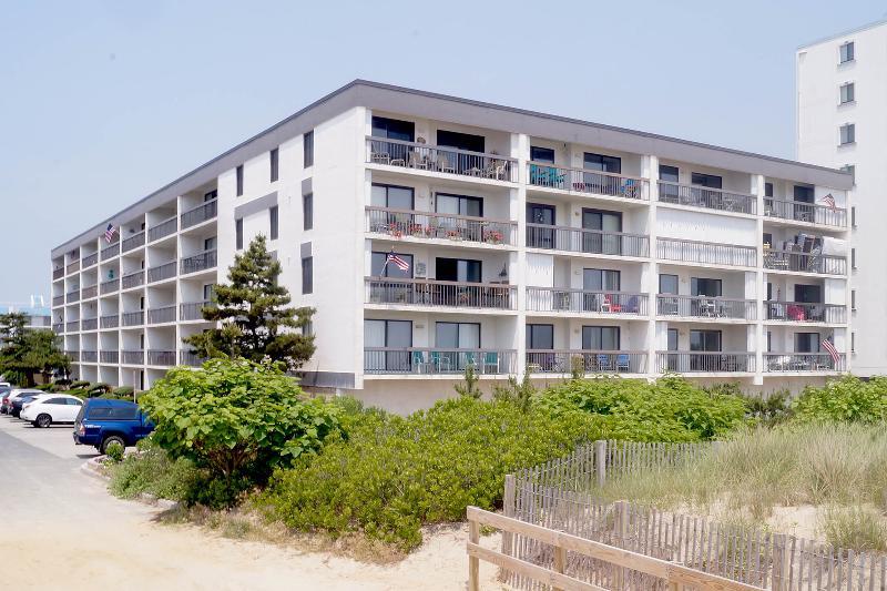 Building,Fir,High Rise,Tree,Office Building
