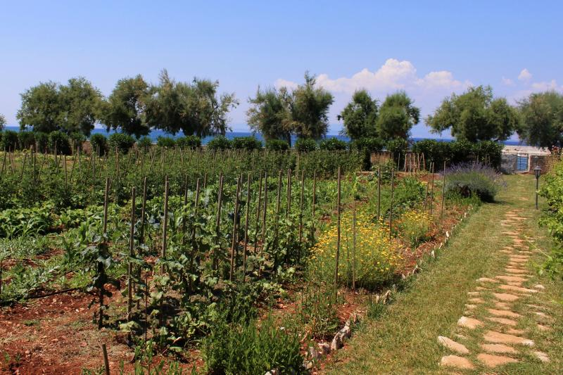 Organic vegetables and herbs garden -your own little green market!