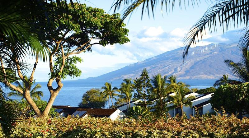 This is your view from the condo lanai and front lawn - we have watched whales breaching from here!