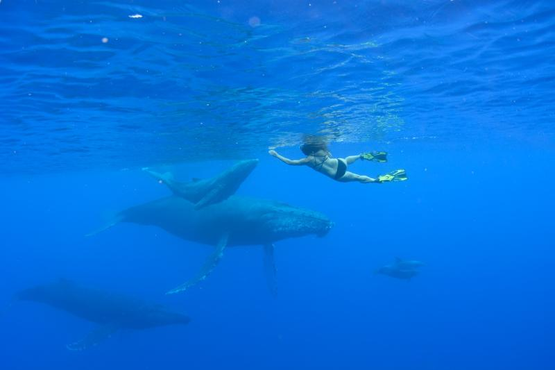 Humpback whales come to Maui every winter and remain through early spring.