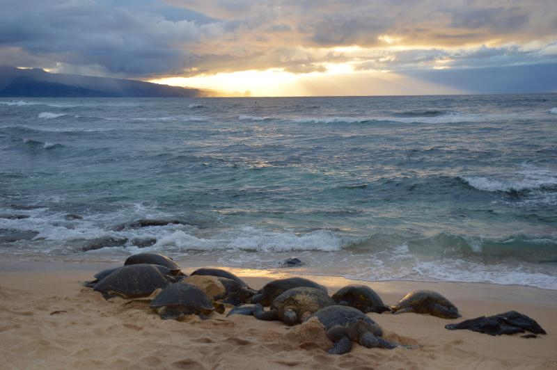 Sea turtles are everywhere! Encounter them while snorkeling, diving or relaxing on the beach