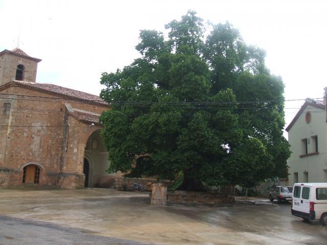 Olmo plaza iglesia Alobras
