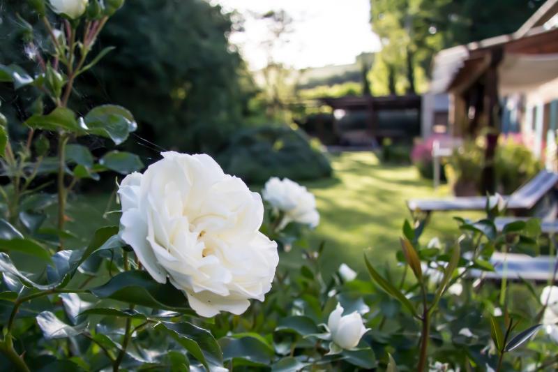 B&B I fiori della cava, holiday rental in Carpegna