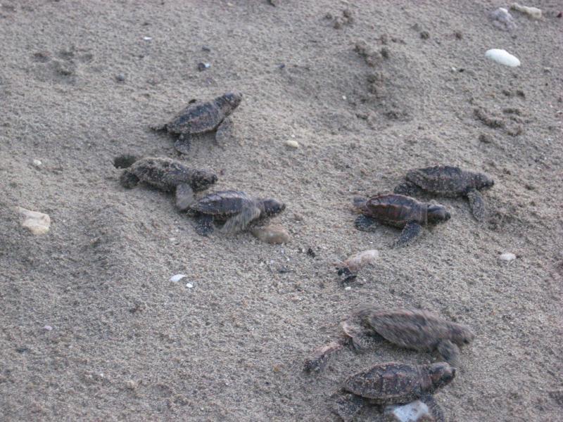 Newborn Turtles