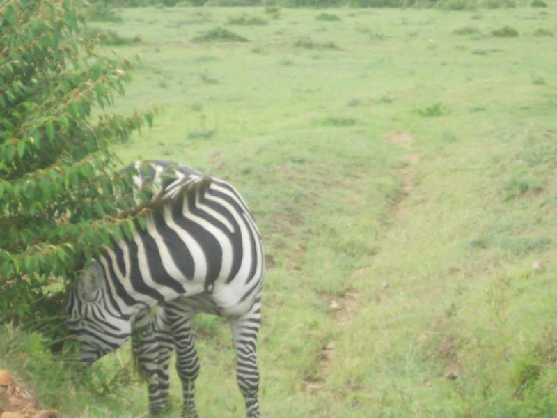 2 BEDROOM APARTMENT, holiday rental in Mount Kenya National Park