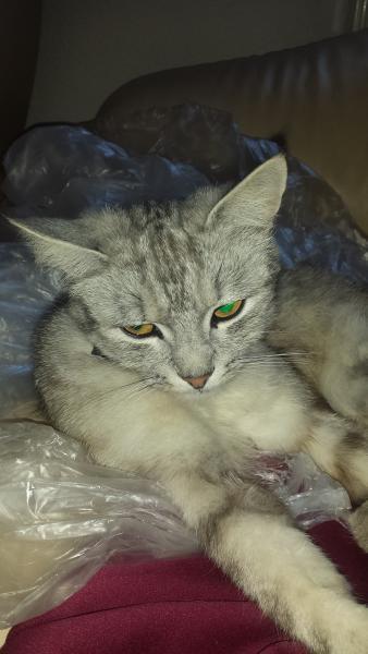 nuestra casa de gato Felix