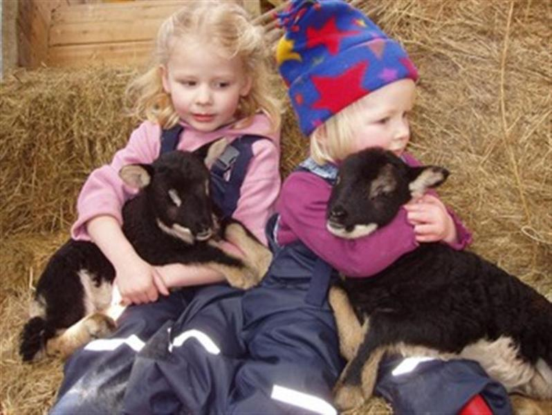 Children can meet and play with animals on the farm, under supervision
