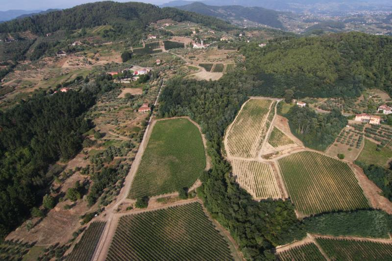 view of our vineyards
