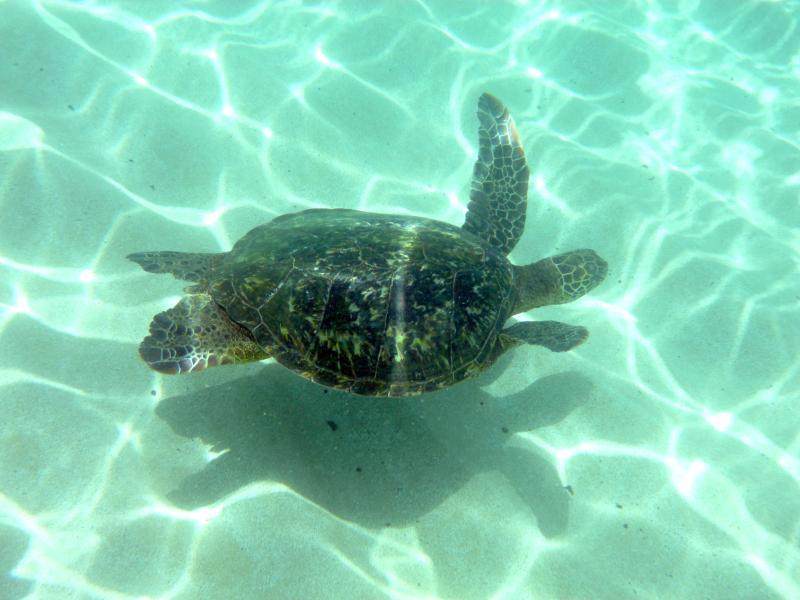Snorkeling adventure awaits you in lagoon 2