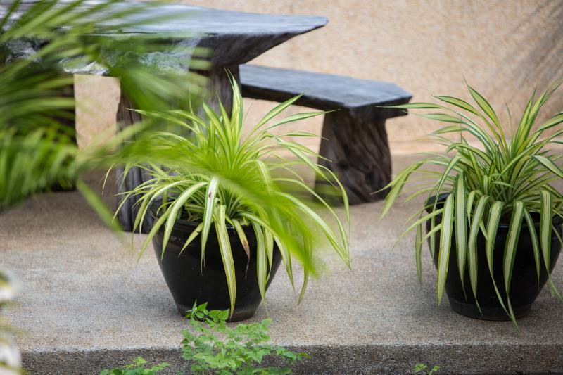 Tropical garden seating