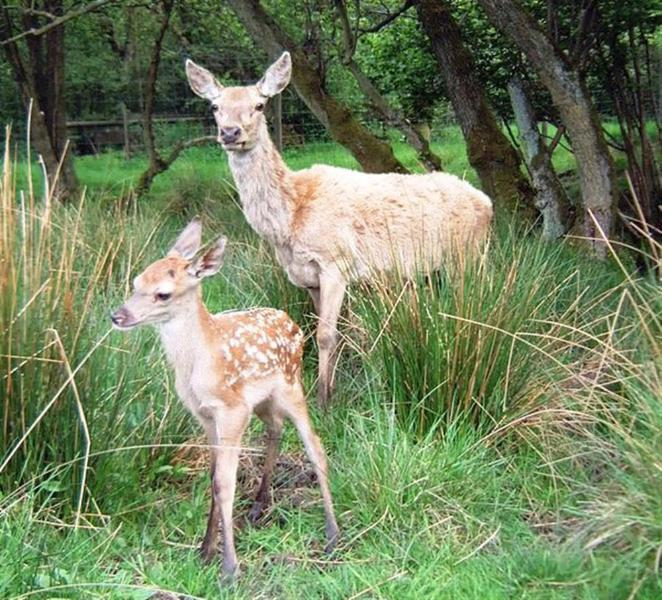 The farm is also home to red deer