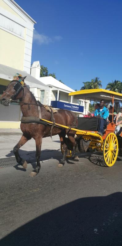 Enjoy a horseride downtown.