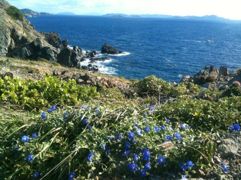 Hiking on St John ~ there's a gorgeous view at every turn!