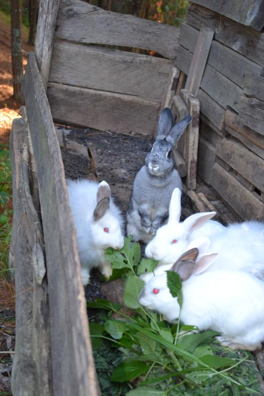rabbits are kept at bugombe island which is part of bugombe gatway