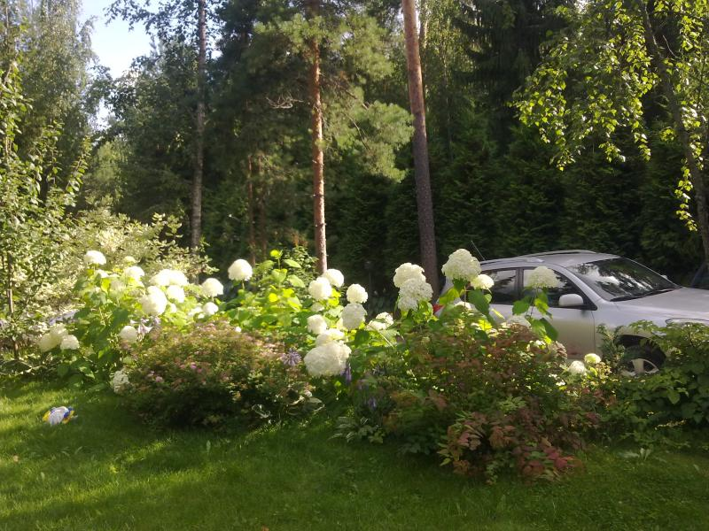 Parking space for 8 cars and some hydrangeas