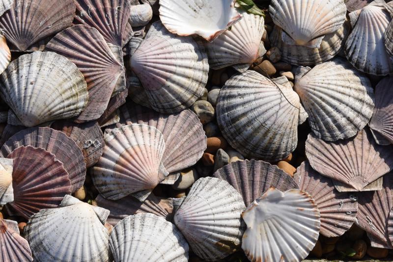 Sea shells by the sea shore.....
