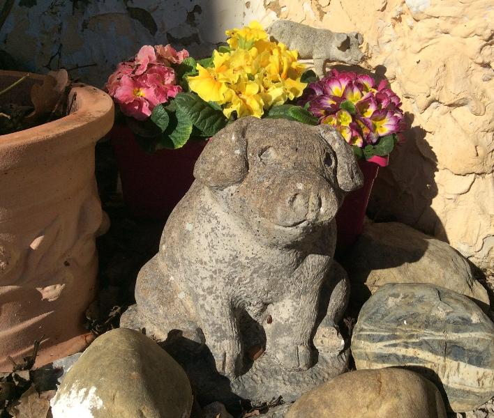 Primroses and pigs in the gite kitchen garden at Paradis!