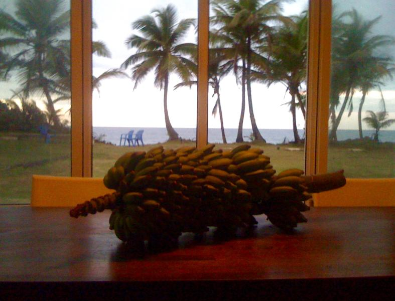 View from the dinning table to the patio...just grass, palm trees, sand and then, the ocean.