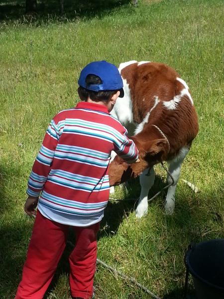 child and calf