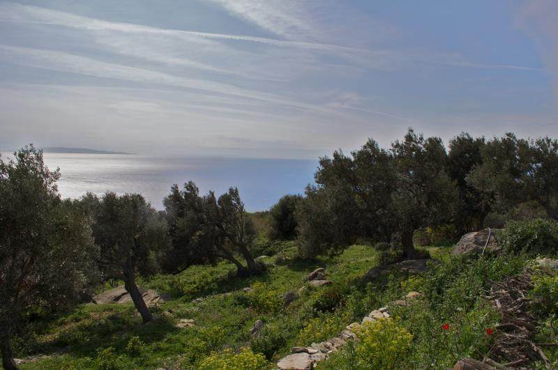 Beautiful renovated stone house in olive grove, vacation rental in Paleopolis