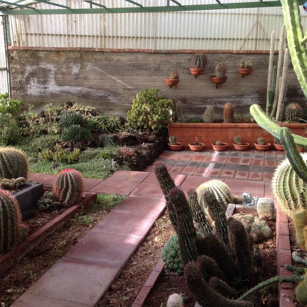 400 species of cacti, in the greenhouse on our property