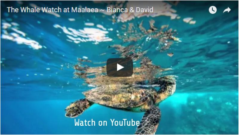 Watch Us on YouTube 'The Whale Watch at Maalaea ~ Bianca&David'
