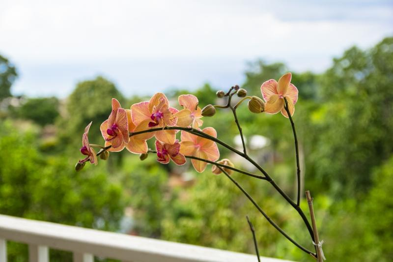 One of many orchids in bloom