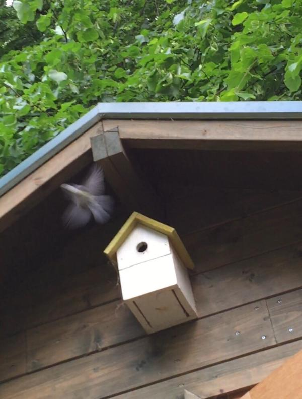 Birds nesting in the garden