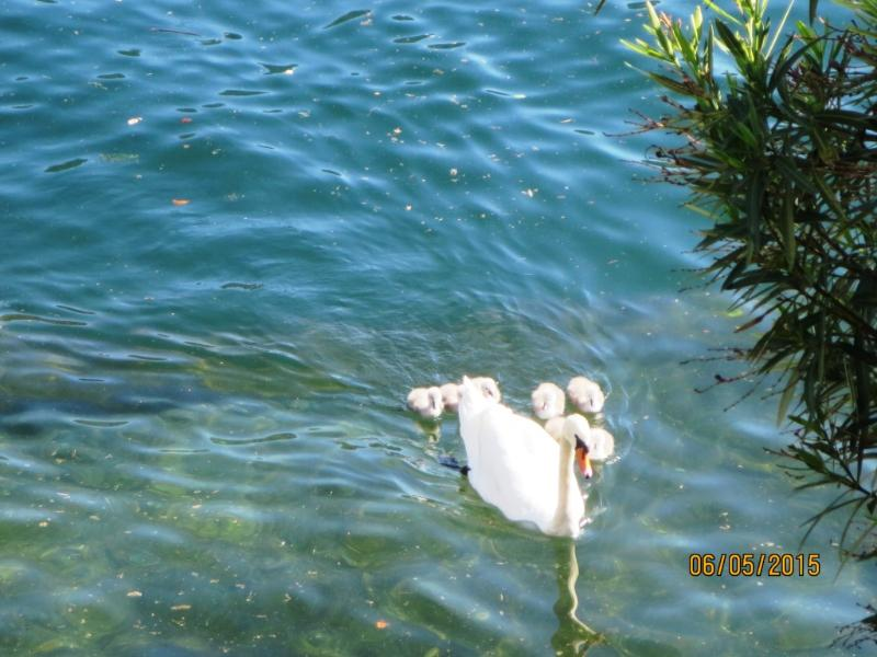 Our new friends born 6 May 2015 sailing past